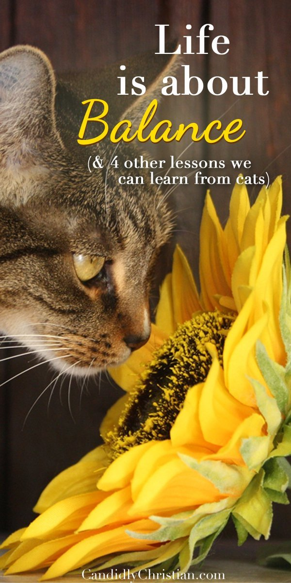 Life is about balance (& 4 other life lessons we can learn from cats)