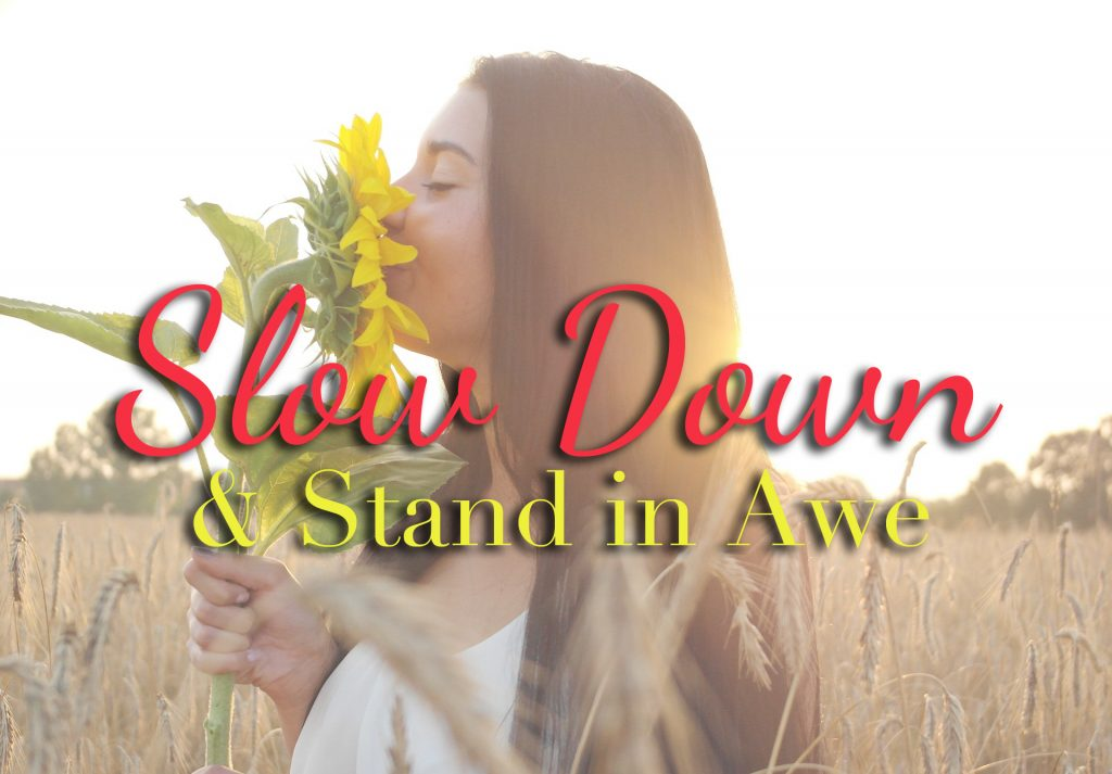 Slow Down and Stand In Awe